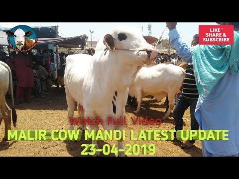 Malir Cow Mandi Karachi  Latest Update 23 April 2019