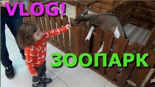 Контактный Зоопарк / Алиса кормит животных /папу УКУСИЛ гусь / feed the animals at the zoo