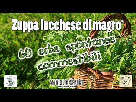 60 erbe spontanee commestibili, elenco piante ad uso alimentare