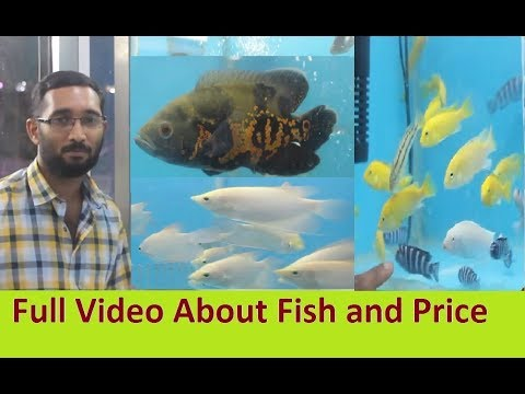 Fish Sale in Muscat Oman - World Of Pets