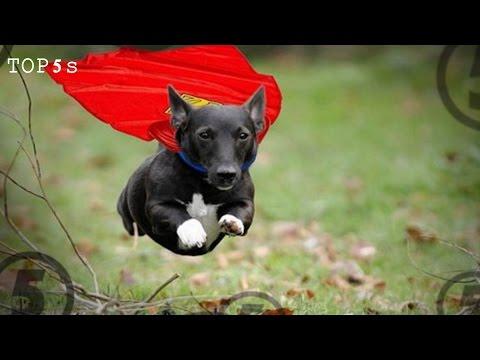 5 Amazing Acts Of Animal Heroism