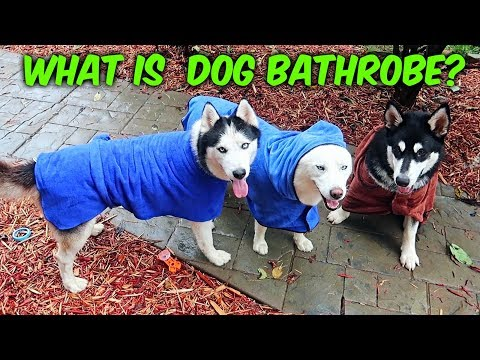 download My Husky Trying Dog Bathrobe for the First Time