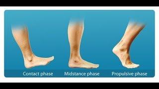 Как укрепить мыщцы спины при ходьбе ?