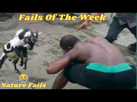 Nature Fails! Fails Of The Week 2021 | AFVE | Back To Nature