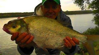 Судак Лещ на Фидер Супер рыбалка на Москва реке