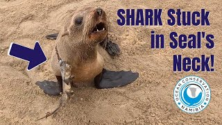 SHARK stuck in Seal's Neck!