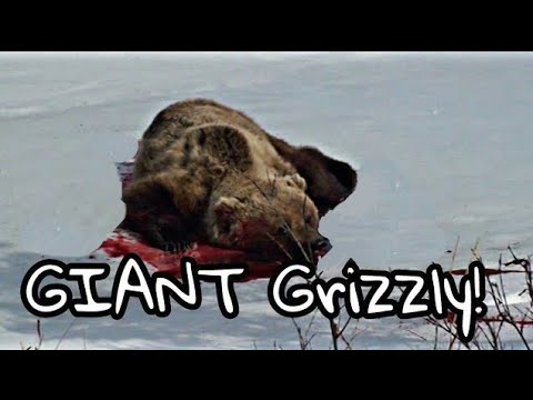 Alaska Spring Grizzly Bear Hunt 2013: The Guide Chronicles