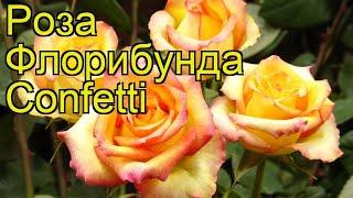 Роза флорибунда Конфетти. Краткий обзор, описание характеристик, где купить саженцы Confetti