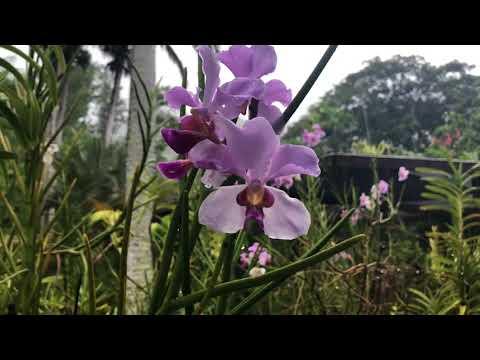 Fiji Garden Of The Sleeping Giant Holiday 2018
