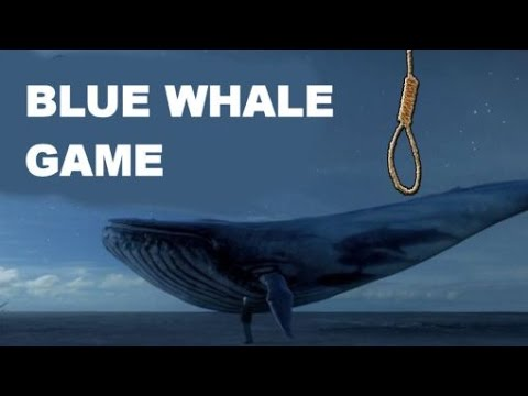 Image result for Blue Whale Game