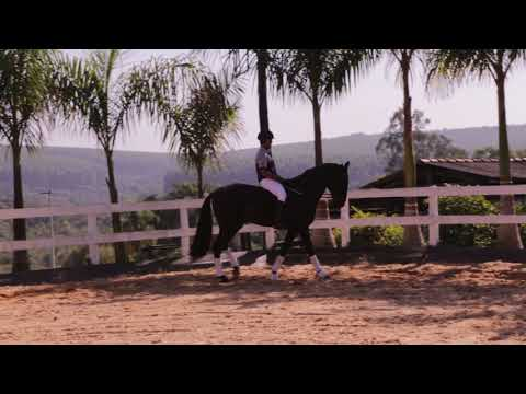 Lote 19 Noturno VR - Cavalos puro sangue Lusitanos - Coudelaria aguilar