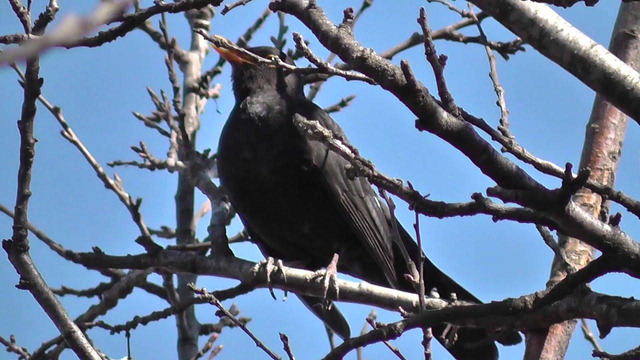 Bird Songs ~ Singing ~ Spring Is Here Finally