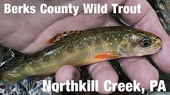 WB - Fly Fishing Berks County Wild Trout, Northkill Creek, PA - July '18