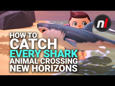 How To Catch The Great White Shark & More In Animal Crossing: New Horizons