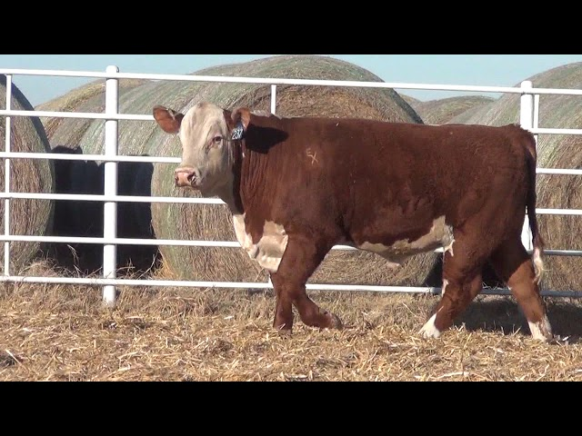 Express Ranches Lot 237