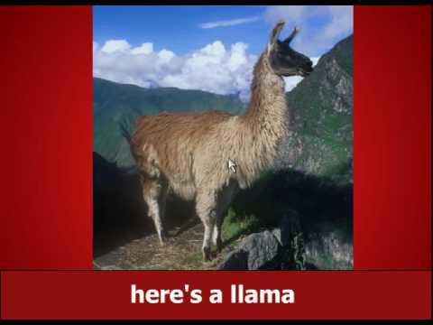 Llama song original
