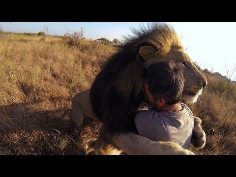 Top 5 Reencuentros de animales con sus cuidadores Parte #2