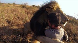 Top 5 Reencuentros De Animales Con Sus Cuidadores Parte 2