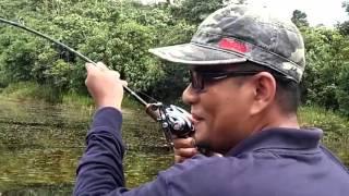Awas!! Mancing Ikan Toman Joran Patah Jadi 3
