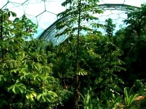 Eden Project Rainforest Biome canopy view & Eden Project: Rainforest Biome canopy view - YouTube