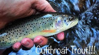 Cutthroat Trout Steelhead fishing Oregon fishing