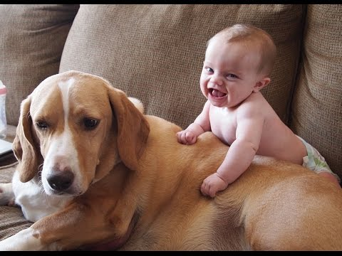 Cute Cats and Dogs Love Babies Compilation (2015)