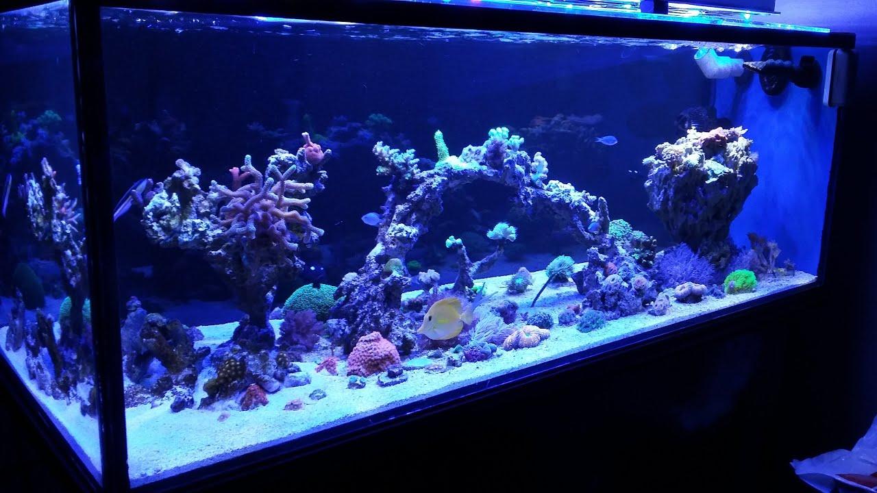 Acuario marino 500 litros 6 meses youtube for Acuario marino precio