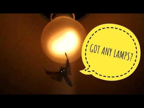 Moth Bouncing Off light - YouTube:Moth Bouncing Off light,Lighting