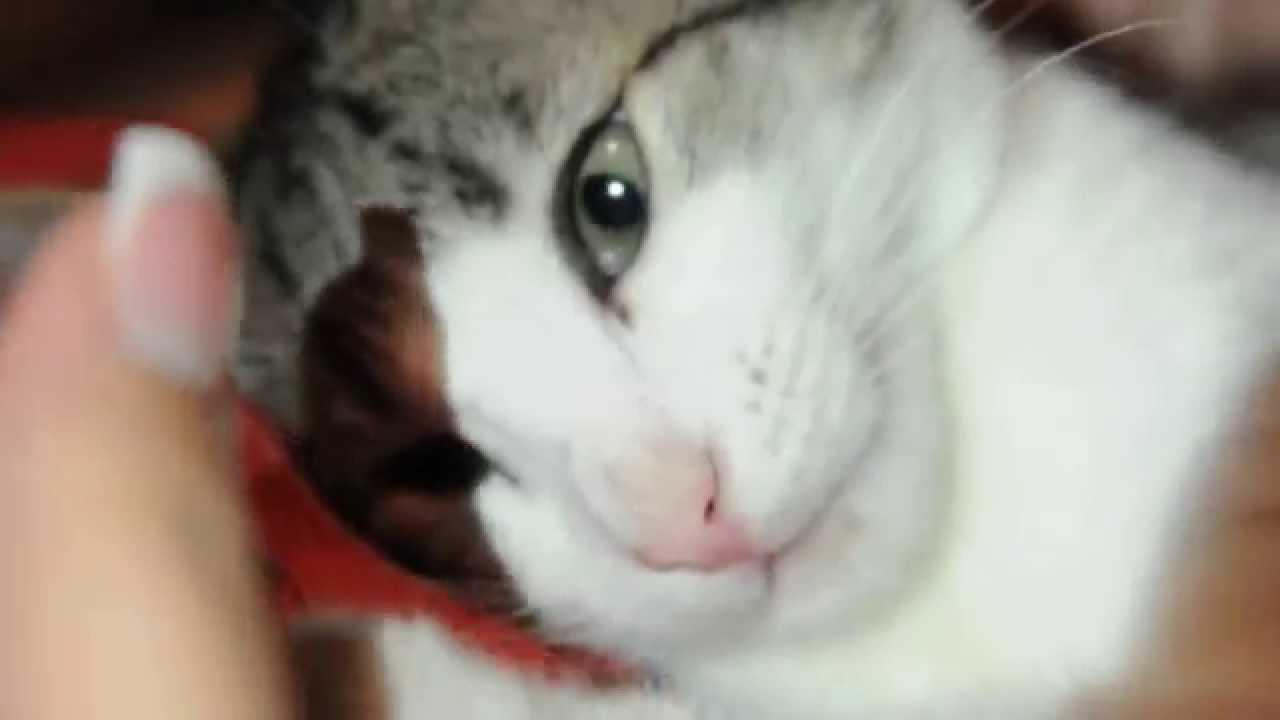 Кот шпрот