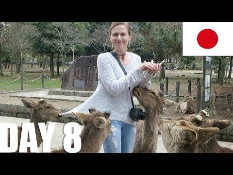 Nara Park & Kyoto. [Japan, Day 8]
