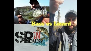 Lizard vs Bass (belly boat)