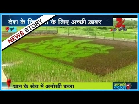 Aapki news | Farmer from Pune die Paddy Farming | Part 1
