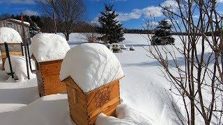 Zapętlaj Frozen Honeybee Apiary Clearing Landing Boards and Yard walk and talk | Frederick Dunn