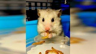 Видео про животных, лучшие видео про кошек март, топовые приколы с котами 2019, новые приколы 2019