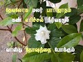 பாரிஜாத மலர் || தேவலோக மலர்|| பாரிஜாத செடி || parijatha poo || parijatha malar || parijat plant ||