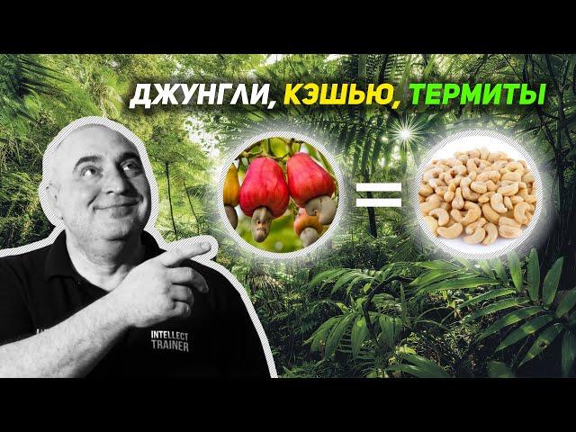 Джунгли, Кэшью, Термиты – Изучаем Природу