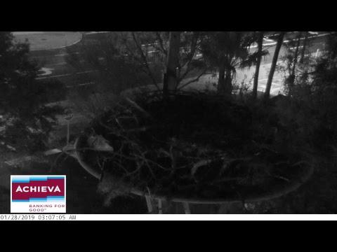 Achieva Osprey Cam