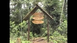 南米エクアドルで、ヘラクレスオオカブト、ネプチューンオオカブトの採...