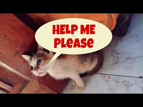 A story of a little stray kitten who cries with real tears | stray kitten needs love & care| mar fy