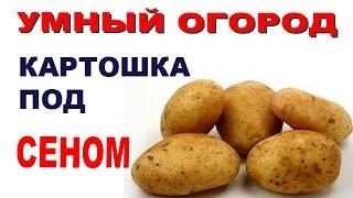 Картошка под сеном   1 часть видео - Как садить?(Как садить картошку под сеном - 1часть Выращивание картофеля под сеном - умный огород., 2014-07-12T16:22:08.000Z)