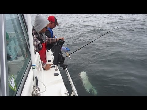 HALIBUT FISHING AT PRINCE RUPERT