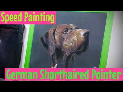 Speed Painting – German Shorthaired Pointer – Portrait of a Pointer in pastels