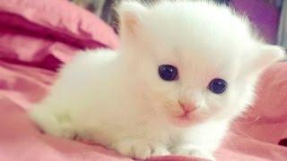 Маленькие животные - Милые животные! Видео Подборка  [NEW HD]