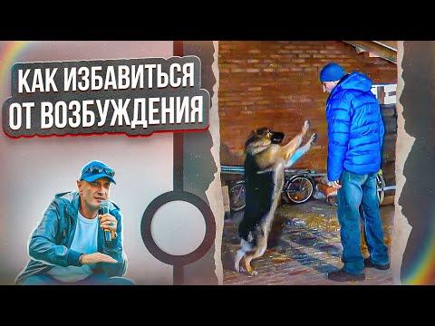 Как отключить собаку