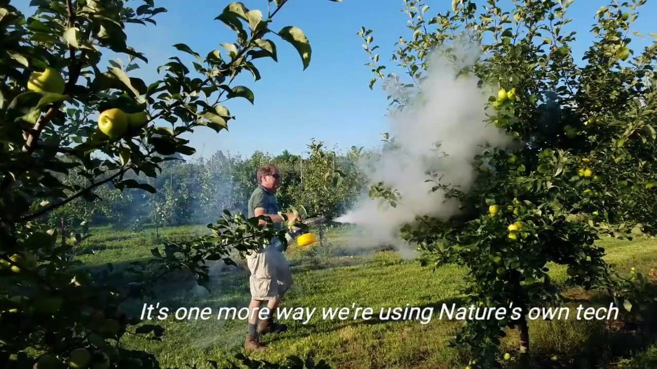 Using a grape extract fog as an all-natural bird repellent spray