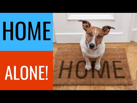 Beagle Puppy Training Basics For New Puppy Owners from YouTube · Duration:  4 minutes 49 seconds