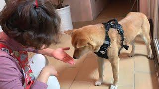 어릴 때 돌봐 준 가족을 1년만에 만난 강아지의 반응..과연 알아볼까?