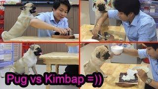 🍵Khi Hot Boy Hàn Quốc làm KimBap cùng chó Pug cute nhất Việt Nam =))⏩ Pugk vlog