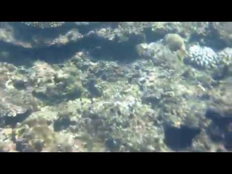 沖縄大度海岸ジョン万ビーチのリーフエッジでシュノーケリング海中動画32014 10 24 12 08 46