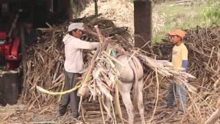 Download Elaboración de panela Artesanal/San Pedro/Loja-Ecuador Mp3 and Videos
